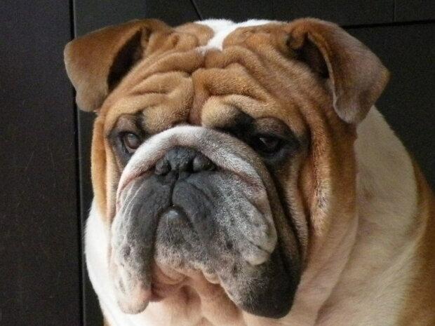 Панацея від депресії: пустотливий пес чіплявся до господарки під час заняття спортом