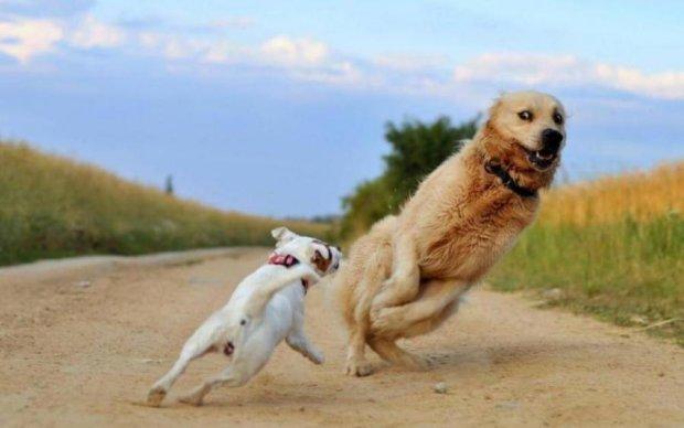 Рада назвала небезпечні породи собак і призначила штрафи