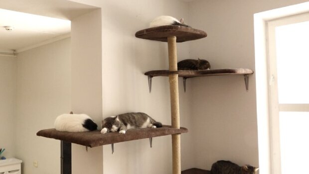 Волонтерки создали дом для котов во Франковске: Суспільне