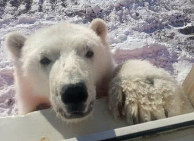 медведица Селфи, фото: LIFE SHOT