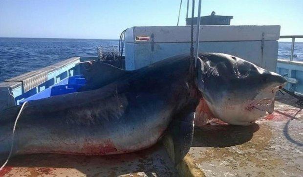 Гігантську акулу зловили на пляжі  Австралії (фото)