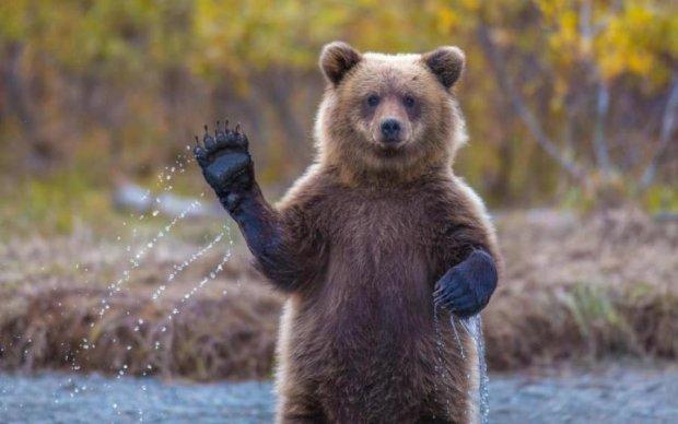 Яка країна, такі й символи: дурний ведмідь повторив долю Вінні-Пуха