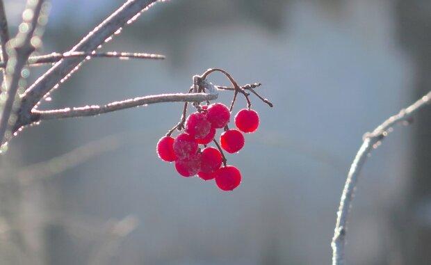 Погода 29 декабря: зима сожмет Запорожье в морозных объятиях, - ни единой капли тепла