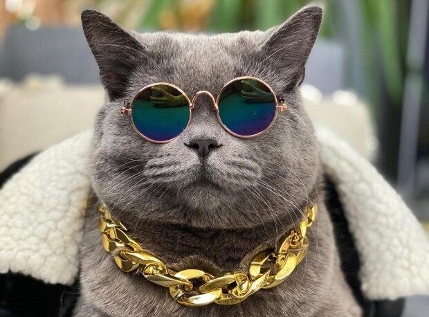 кіт Понзу, фото з Instagram