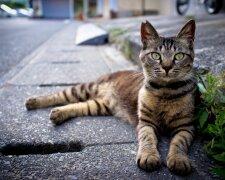 Кошка, фото: Униан