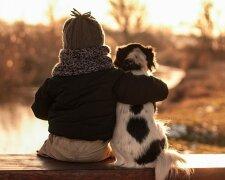 """Как вычислить """"человеческий возраст"""" собаки, фото из свободных источников"""