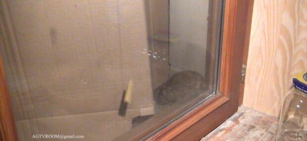 """Дома днепрян заполонили крысы: """"Фу, хвостище!"""""""
