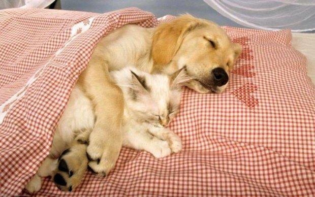 Топ-5 полезных советов, как засыпать быстрее