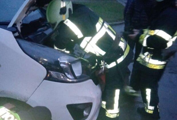 На Львівщині кіт застряг під капотом автомобіля: Facebook ДСНС України