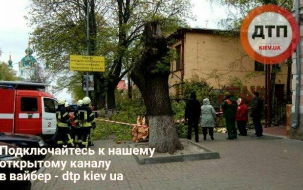 Величезне дерево ледь не поховало двох киян