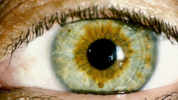 Тріумф науки: медики створили сітківку ока в лабораторних умовах
