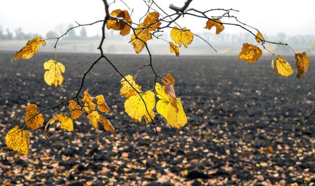 Погода в Украине, фото: Fregrantica.ru