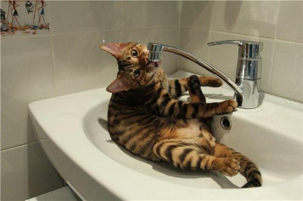 Во Львове массово отключают водоснабжение: найдите свой дом