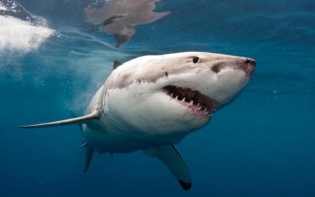 Модель захотіла феєричних фото на морі, але їй завадила зграя акул