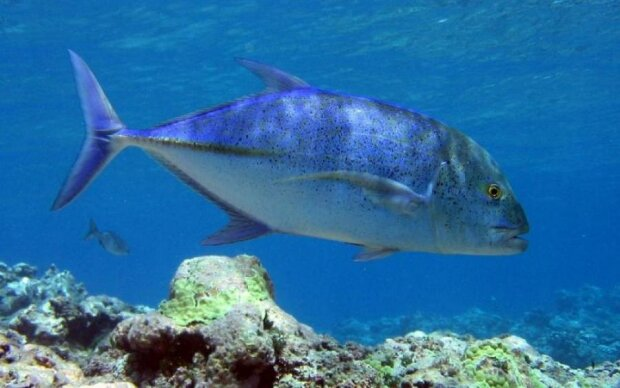 Риби помстились птахам за мільйони років винищення