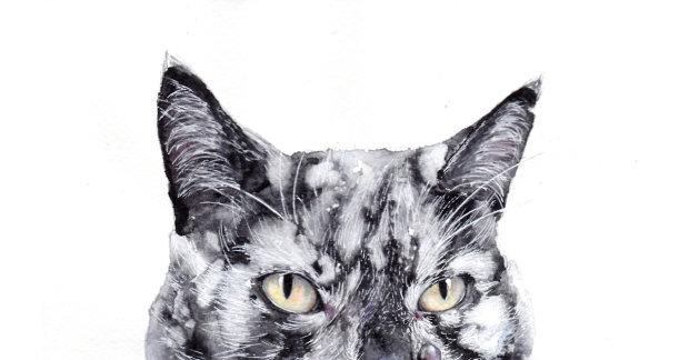 Витилиго: из-за редкого заболевания кошка меняет цвет прямо на глазах