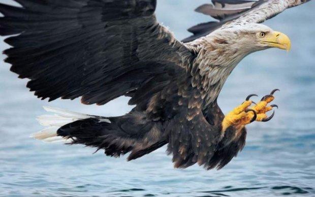 Найбільший хижий птах показав світ своїми очима: відео