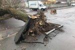 Поваленные деревья, оборванные линии электропередач и сорваные крыши: последствия жуткого удара показали в сети