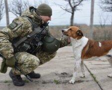 Собака на службе, пресс-служба ООС