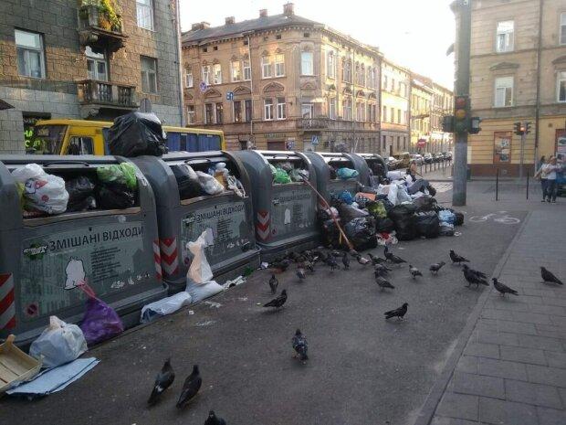 Центр Львова закидали сміттям - голуби, недоїдки і сморід на кілометр