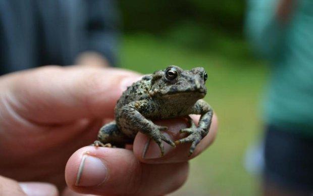 Появился новый вид жаб: живут в норах, любят спариваться и спать