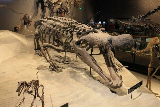 Весом в 3 тонны и длинной в 9 метров: швейцарские ученые обнаружили кости крокодила-гиганта