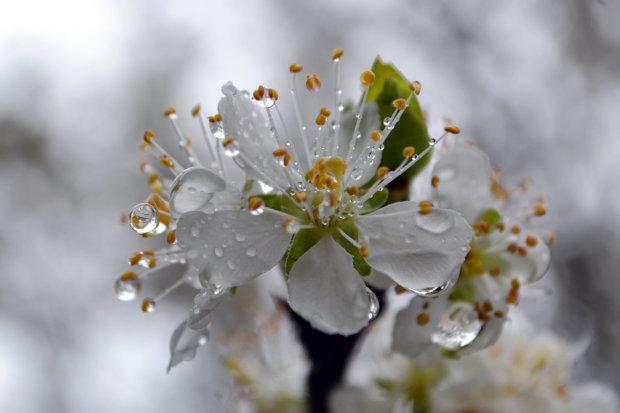 Весна, як справжня жінка, покаже характер: синоптики дали прогноз на тиждень