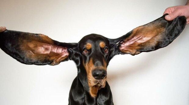 Собака рекордсмен, фото: Книга Рекордов Гиннеса