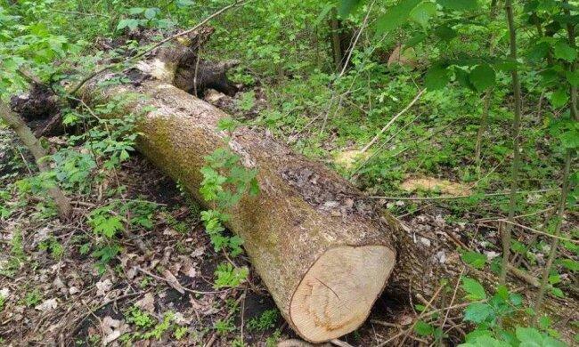 Незаконна вирубка дерев і лісів Тернопільщини \\ Фото: Facebook ДЕІ