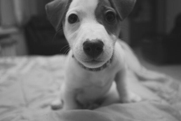 Собачка, фото pikabu
