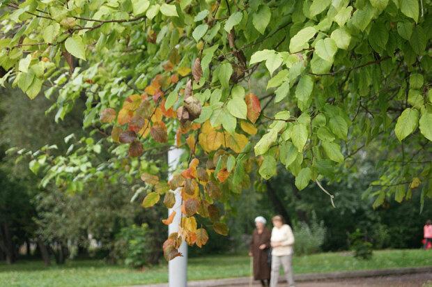 Погода на 29 августа: осень пришла раньше времени
