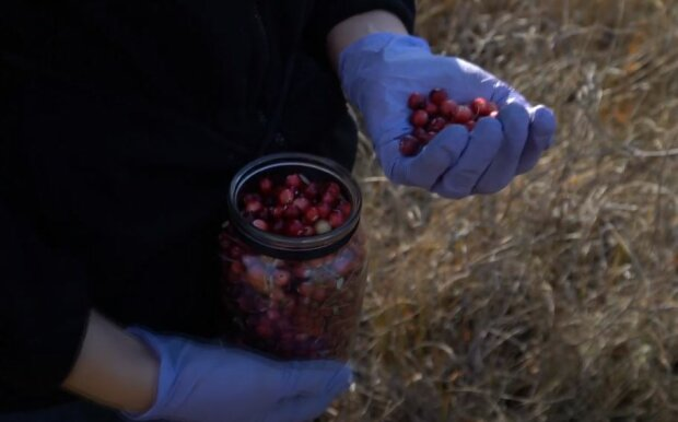 Клюква, скриншот видео