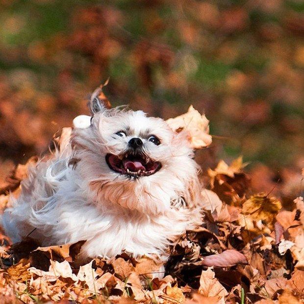 Уморительные анекдоты на 11 октября сделают вас самым счастливым человеком планеты