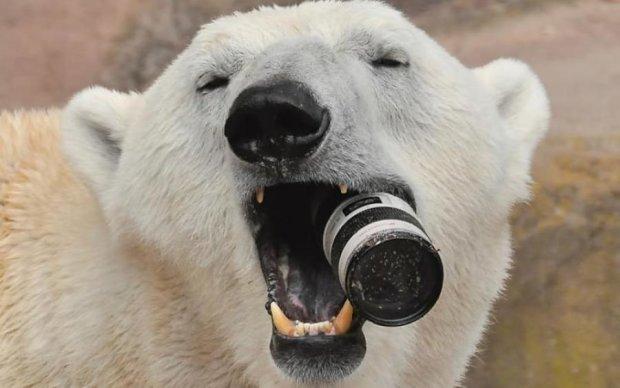 Кажуть, що північні ведмедики не вміють посміхатися, а все через карієс
