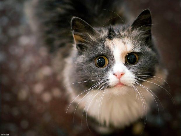 Хозяин похвастался говорящей кошкой, пользователи сети начали крестится: это, конечно, мило, но услышать такое посреди ночи страшновато
