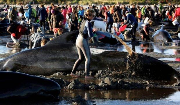Волонтери врятували життя сотням китів-самогубців
