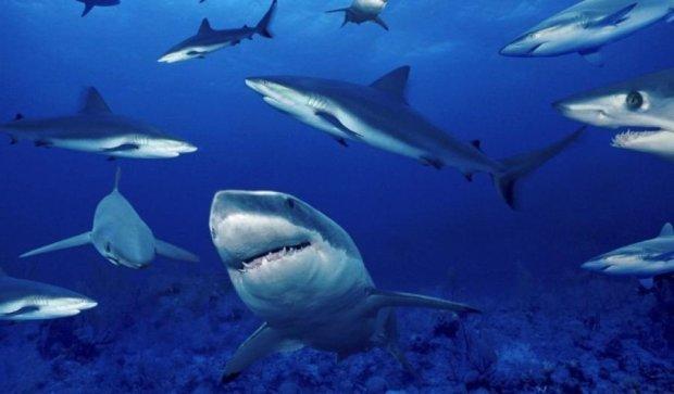 Учені знайшли акул у кратері діючого вулкана (відео)