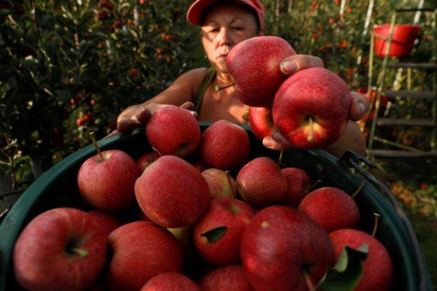 Безвізу більше немає: Європа прикрила лазівку для заробітчан