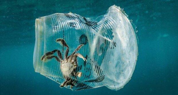 краб в пластиковом стакане, фото: pxhere