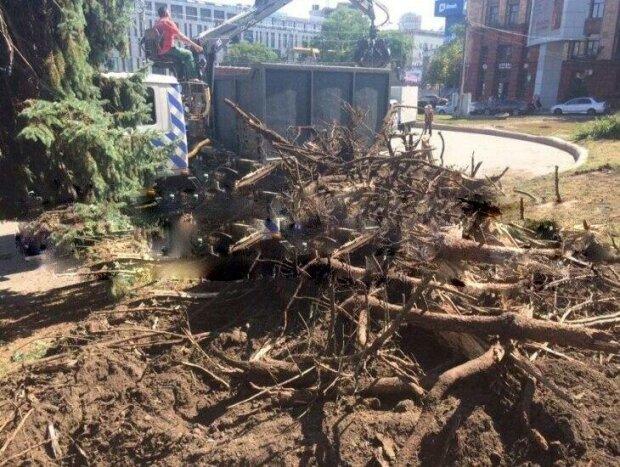 """Злосчастный ураган лишил днепрян главной достопримечательности: """"Стояли более 50 лет"""""""