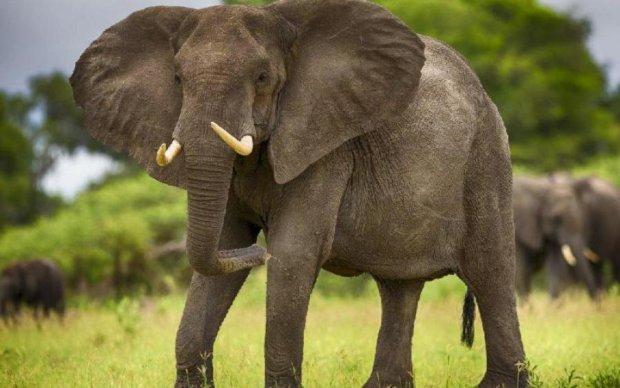 Размеры животных сопоставили с вероятностью их вымирания