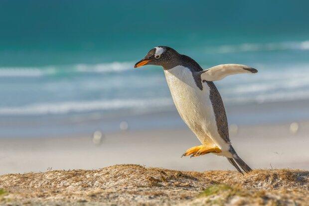 """Глобальне потепління вигнало пінгвінів на """"український"""" острів: їх уже кілька тисяч"""