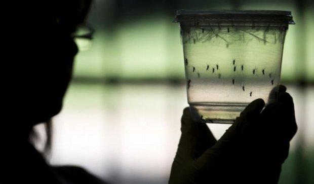 В Україну комарі-переносники Зіка можуть потрапити з Туреччини та Болгарії