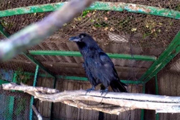 В Харьковском зоопарке можно поговорить с вороном