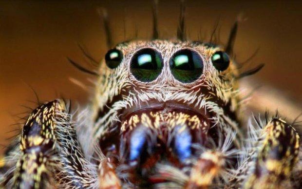 Простими словами: чому ми боїмося павуків і як з цим боротися