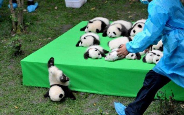 Работа мечты: сеть растрогали игры в китайском зоопарке