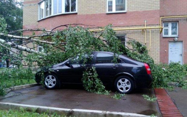Смяло, как консервные банки: в Киеве деревья уничтожают машины