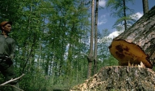 У Києві заборонили рубати дерева