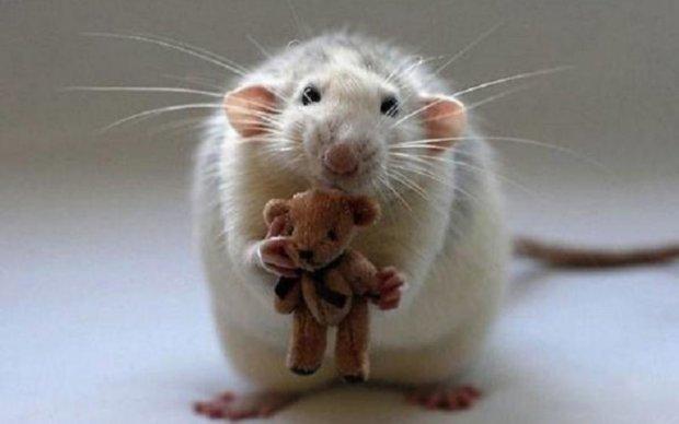 Миші довели соціальну природу любовного потягу