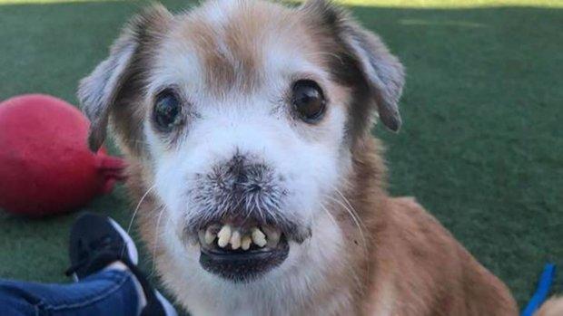 Собака з страхітливою зовнішністю стала інтернет-мемом: він здоровий, тільки виглядає трохи смішно